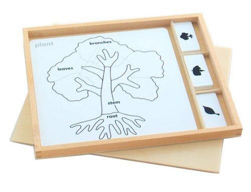 Montessori Botany Puzzle Activity Set