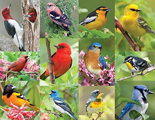 Springbok Birds of a Feather Jigsaw Puzzle 36-Piece