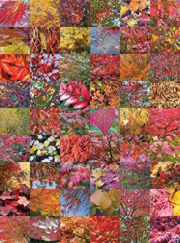 Andrews  Blaine Autumn Quilt Puzzle 1000-Piece