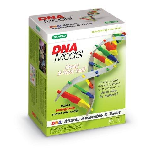 DNA Model Kit by Bio-Rad Educational Science Kits