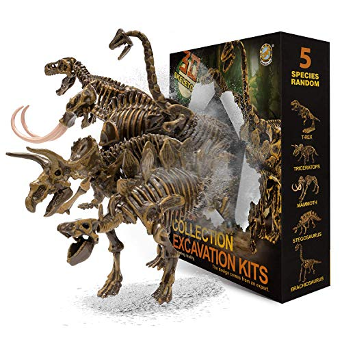 muscccm Dinosaur Toys Excavation Kits Excavate Five Different Dinosaur Real Fossils Great STEM Science Gift for Dinosaur and Archeology Enthusiasts of Any AgeCool Toys for Kids
