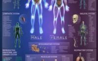 Popar-Human-Anatomy-Interactive-Wall-Chart-43.jpg