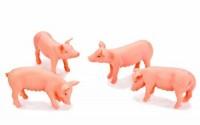 Van-Manen-571905-Pig-figures-set-of-4-by-Kids-Globe-39.jpg